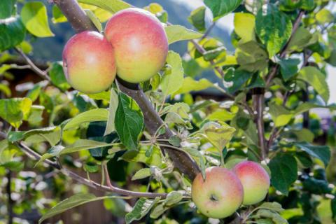 Дегустация фермерских продуктов